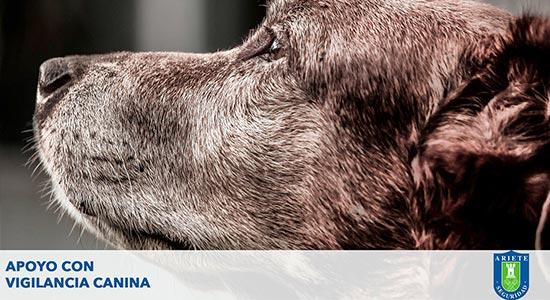 Apoyo con Vigilancia Canina S.A